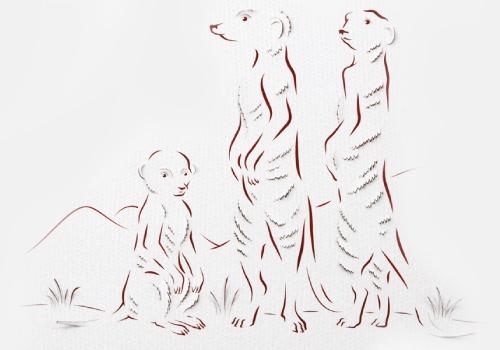 STBB Meerkats